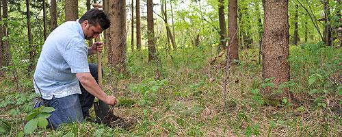 Bäume pflanzen für einen gesünderen Wald