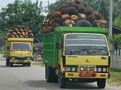 Kaufempfehlung für zertifiziertes Palmöl